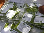 Packaged Moringa leaf powder