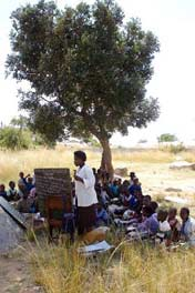 Some rural Zimbabwean children are still forced to have school lessons under trees